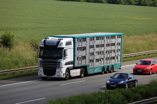 Animal transport truck on the highway in Germany