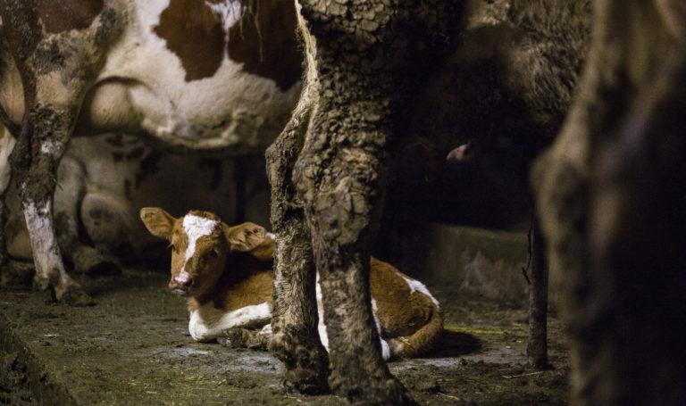 Interview in der NZZ: «Fleischessen ist nicht begründbar»