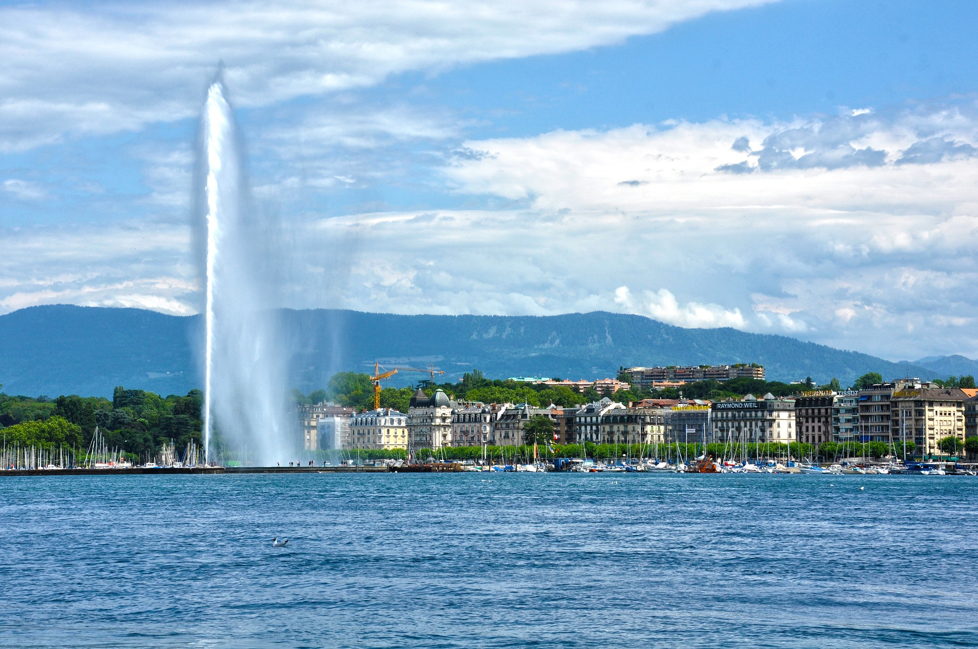 Vegan in Genf