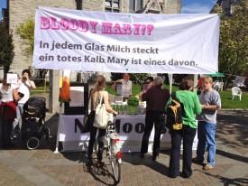 """Bericht von der """"Tag der Milch""""-Aktion von TIF und VGS"""