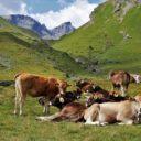 Die Schweiz ist ein Grasland – oder?
