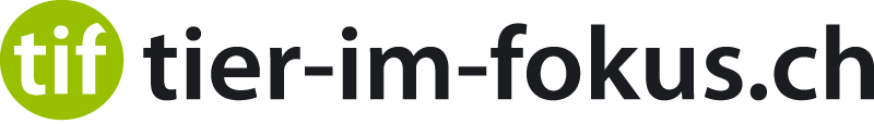 tif-Logo_gruen_Schrift_rechts